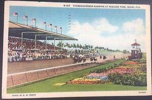 Vintage-Postcard-Racetrack-Thoroughbred-Running-Horses-Hileah-Park-Miami-FL-C16
