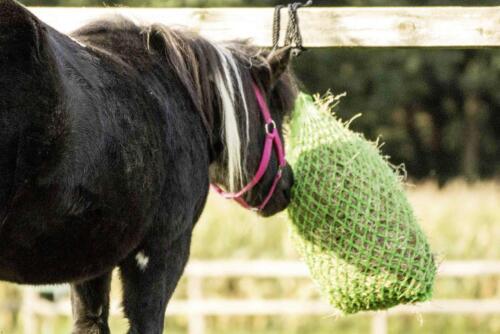 grün kleines Netz für Shetty Heunetz LITTLE Pony kleine Fressöffnungen