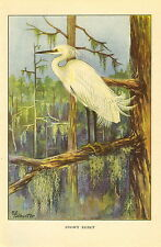Antique Vintage Scarce T.E. Todhunter Bird Print ~ Snowy Egret