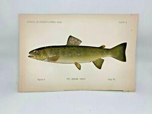Scarce-First-Denton-Fish-Print-1889-Brown-Trout-Original