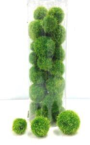 Artificial-Fuzz-Balls-Green-Great-for-Floral-Work-Basket-Vase-etc-3-4-034-1-034-1-1-2-034