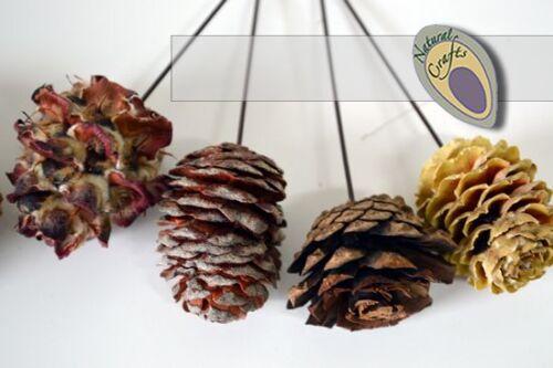 Naturel filaire cônes mixte packs-couronne et décorations de noël