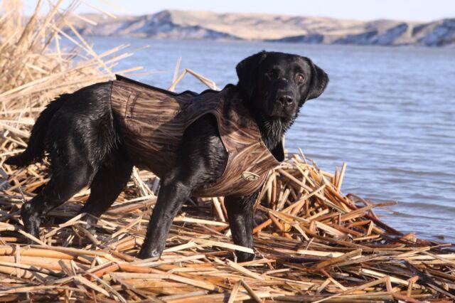 avery dog vest