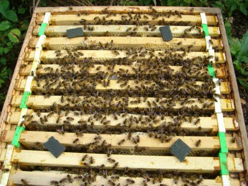 20 Tütchen Apilife Var Varroa Behandlung