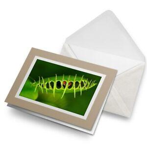 Greetings-Card-Biege-Venus-Flytrap-Plant-Nature-Garden-24372