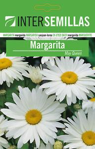 Margarita-Weiss-IN-Tasche-Farbig-180-Saatgut-May-Queen