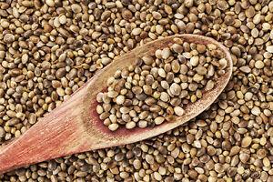 15-Graines-de-Chanvre-Cannabis-Sativa-Plante-Jardin-Bio-textile-Seeds