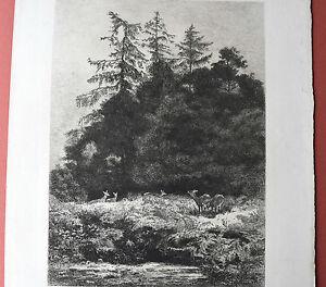 Karl-BODMER-1809-1893-DAIMS-dains-un-PARC-Eau-Forte-Originale