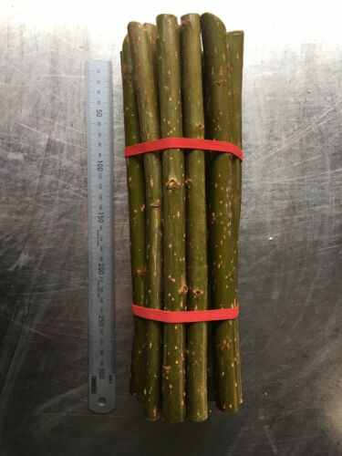 200 Hybrid Organic Willow Cuttings *Cut To Order*