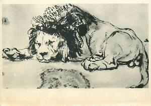 Animals-Postcard-Rembrandt-lion-drawing
