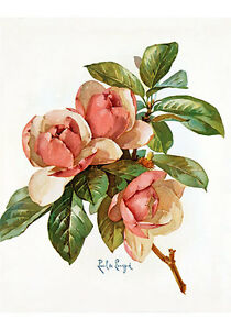 Pink-Magnolia-Blossoms-by-Paul-de-Longpre-Art-Print-of-Vintage-Art