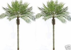 Image Is Loading 2 Artificial 8 Foot Phoenix Palm Trees Plant
