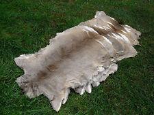 Roe Deer Skin, fur, rug, hide taxidermy, fly tying, B-grade    lot of 10  -SALE-