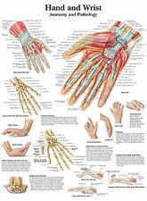 Cartel médico A3-la mano humana & Muñeca (anatomía libro de texto médico de imágenes)