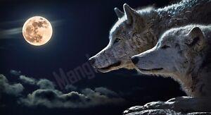 Quadro-legno-59-x-32-cm-stampa-in-alta-qualita-fantasy-lupi-chiaro-di-luna-piena