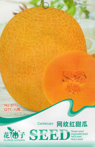 1-Pack-15-Reticulated-Red-Muskmelon-Seeds-Cucumis-Melo-Organic-B113