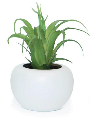 BOTANICS Mini Succulent Desk Decor Home Artificial Greenery **FREE DELIVERY**