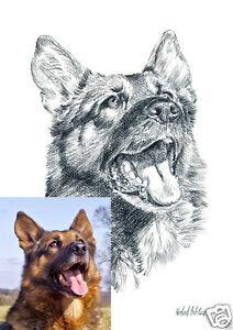 Auftragsmalerei-001DIN-A4-Pastellzeichnung-Tierbild-Tierportrait