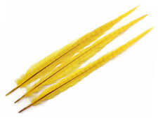 """Pheasant Feathers 