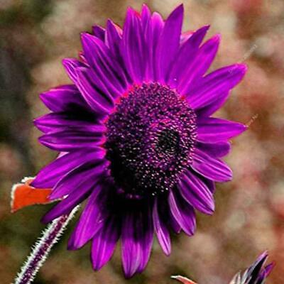 40 pcs//bag sunflower sunflower seeds for planting,bonsai flower seeds,10 colours
