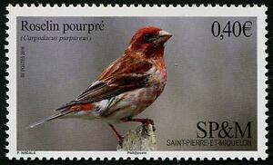 Purple-Finch-mnh-stamp-Saint-Pierre-amp-Miquelon-2016-bird-roselin-pourpre