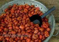8 Cups Mini Orange Pumpkin / Putka Pods Autumn Bowl Fillers
