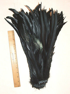 """Rooster Tail Coque Feathers 1//4 lb Black Iridescent  16-18/"""" Length"""