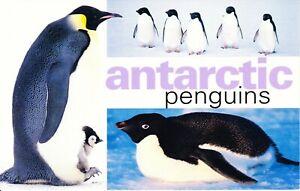 Australia-Post-AAT-Design-Set-MNH-2000-Antarctic-Penguins