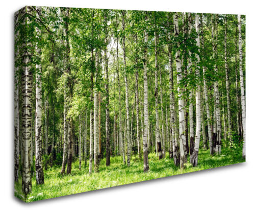 Forrest Woodland Trees Sun Stunning Scenery Photo Wall Art Landscape Canvas RMC