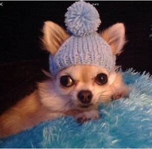 Image is loading Chihuahua-Beanie-Hat 57d016a3fa0