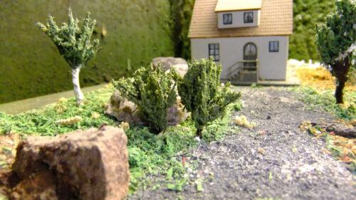 auch als Einzelpflanze oder kleine Sträucher 2 cm 10 Stk grün Heckenpflanzen