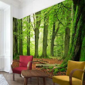 Wald-Tapete-Vlies-Tapete-Poster-Mighty-Beech-Trees-Foto-Tapete-Wandtapete-Deko