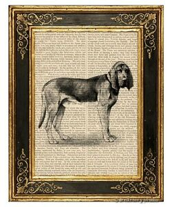 Bloodhound Dog Art Print on Vintage Book Page Home Office Wall Hanging Decor Pet