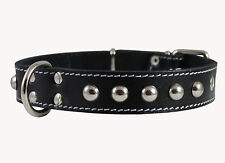 "Genuine Leather Dog Collar 15""-20"" neck Studded 1.25"" wide Black  Amstaff"