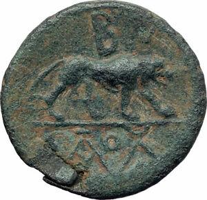 AMYNTAS-of-GALATIA-KINGDOM-Rare-Ancient-Greek-Coin-Hercules-Nemean-Lion-i73505