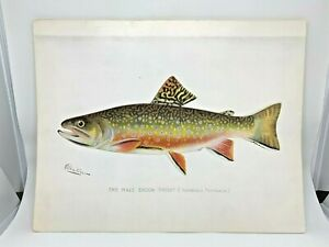 Original-Antique-Denton-Fish-Print-Brook-Trout-Male