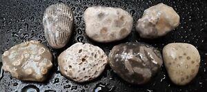 7-Ancient-Michigan-Fossil-Sampler-Natural-Stones-MI-ROCKS-Art-Display-Fossils