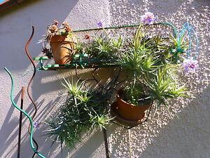 plantes-aeriennes-sans-terre-boule-6ramifications-supplements-verveinlaurier