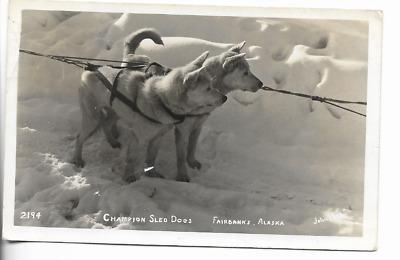 1900-1930 Lumber Dog Sled Alaska Vintage Photograph 8.5 x 11 Reprint