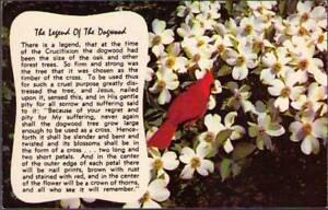 v0q-Postcard-The-Legend-Of-The-Dogwood