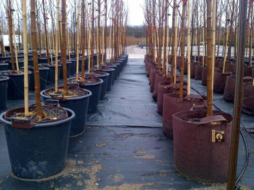 poignées 5 Root Pouch Vert 39L Géotextile Smart grow Pot déco jardin
