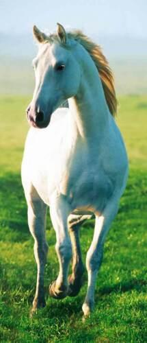 86 cm x 200 CM Türtapete türposter cheval blanc moisissure envie de liberté env