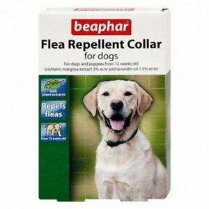 Beaphar Chien Anti-colliers VyYoFMOF-07204134-595292163