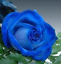 Semillas-rosas-disponible-en-9-tonos-diferentes-10-20-o-30-semillas miniatura 4