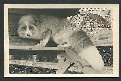 Pierre Mk 1962 Fauna Fuchs Fox Renard Maximumkarte Maximum Card Mc Cm D4845 äRger LöSchen Und Durst LöSchen Selbstlos St Wildtiere