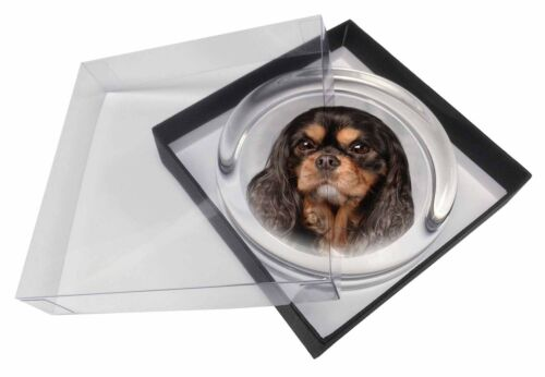 Black and Tan King Charles Spaniel Glass Paper in Gift Box Chri, ADSKC2PW