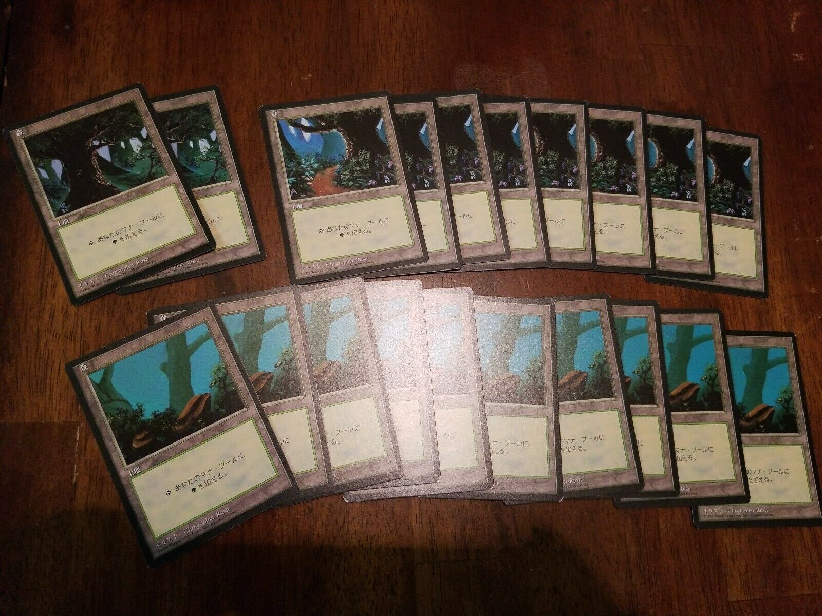 20x Forest (Japan Test version) 1996 4th Magic Collection mtg mtg mtg fbb 05d