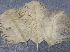 Reasonable Lot Of 3 Antique Gray Ostrich Feather Millinery Accessory,hat.plumes D'autruches Relieving Rheumatism And Cold Lace, Crochet & Doilies