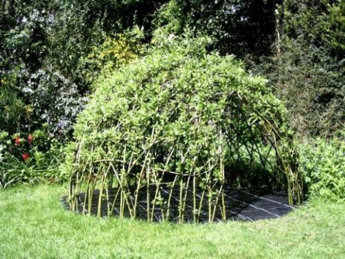 Whips PreOrder 1.5m Living Willow Dome Kit Rods Cuttings Living Structures