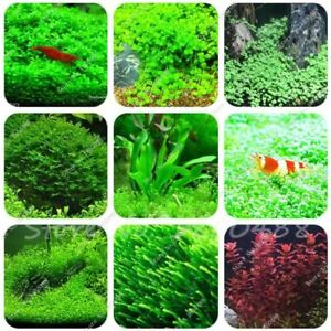 500-1000pcs-aquarium-grass-seeds-mix-water-aquatic-plant-seeds-aquarium